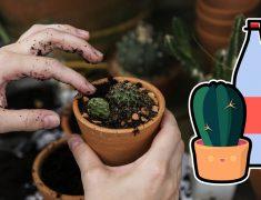 Vai viajar e não tem ninguém para regar suas plantas? Monte um sistema de irrigação de forma rápida e barata
